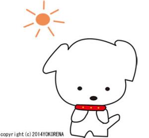 reo-太陽